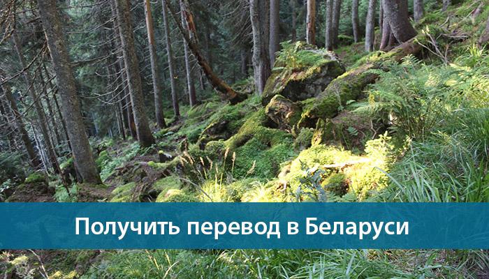 kak poluchit perevod v belarusi