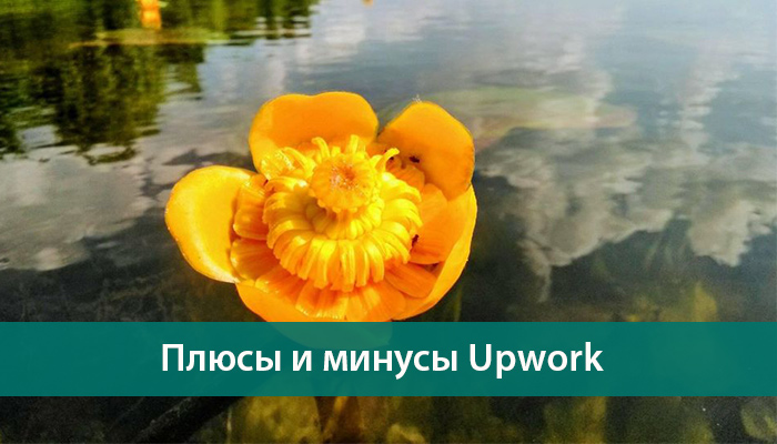 plyusy minusy upwork