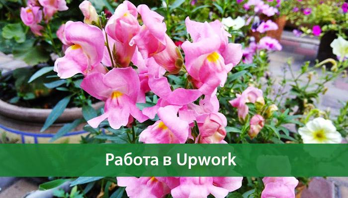rabota upwork