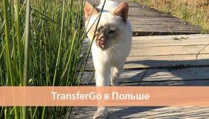 transfergo polsha