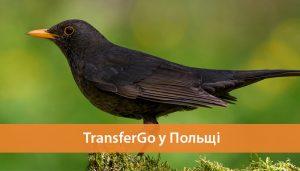 transfergo polshha