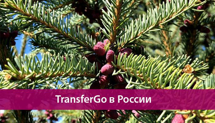 transfergo rossiya