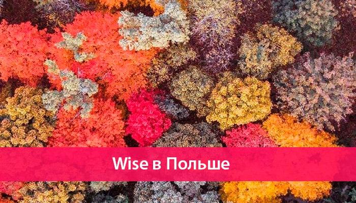 wise v polshe